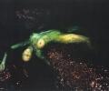 laser_liz_magic__electric__emerge_series__2003__usa