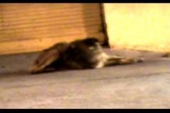 cleantho_viana___brazil_a_still_eye_doesn_t_see__2009_video
