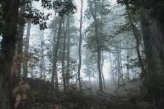 eva_rorandelli___italy_hiding__2009_video